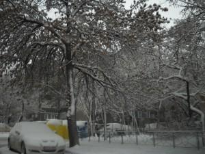 Iarna Oradea 19012013 2