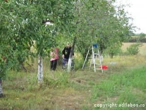 cules de prune la Giris 1