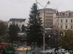 brad Oradea1 (14)