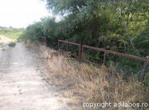 Podul Labosului3