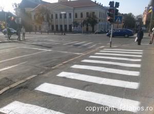 zebra Oradea