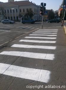 zebra Oradea2