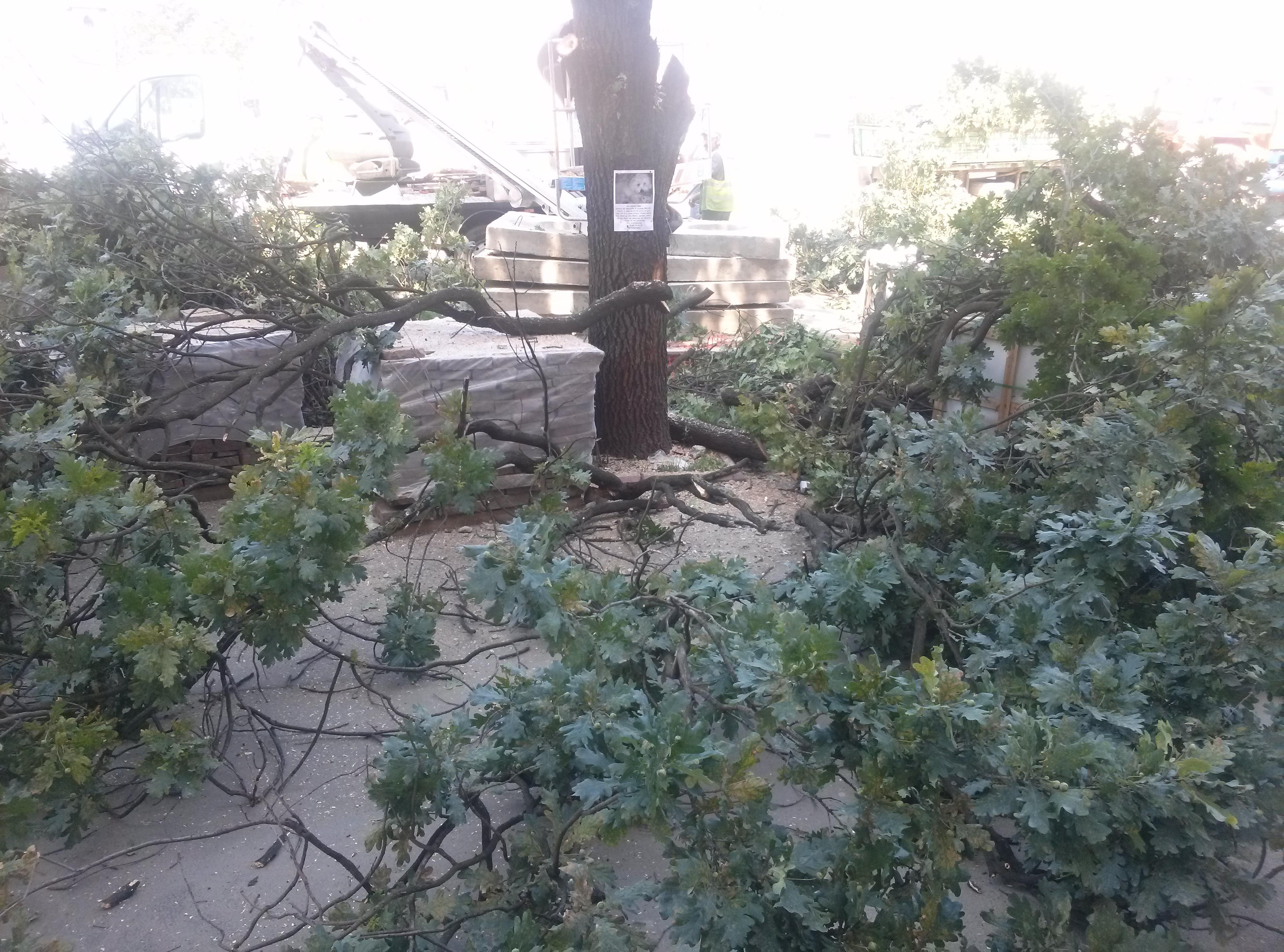 copaci taiati 30 iunie 2015 (10)