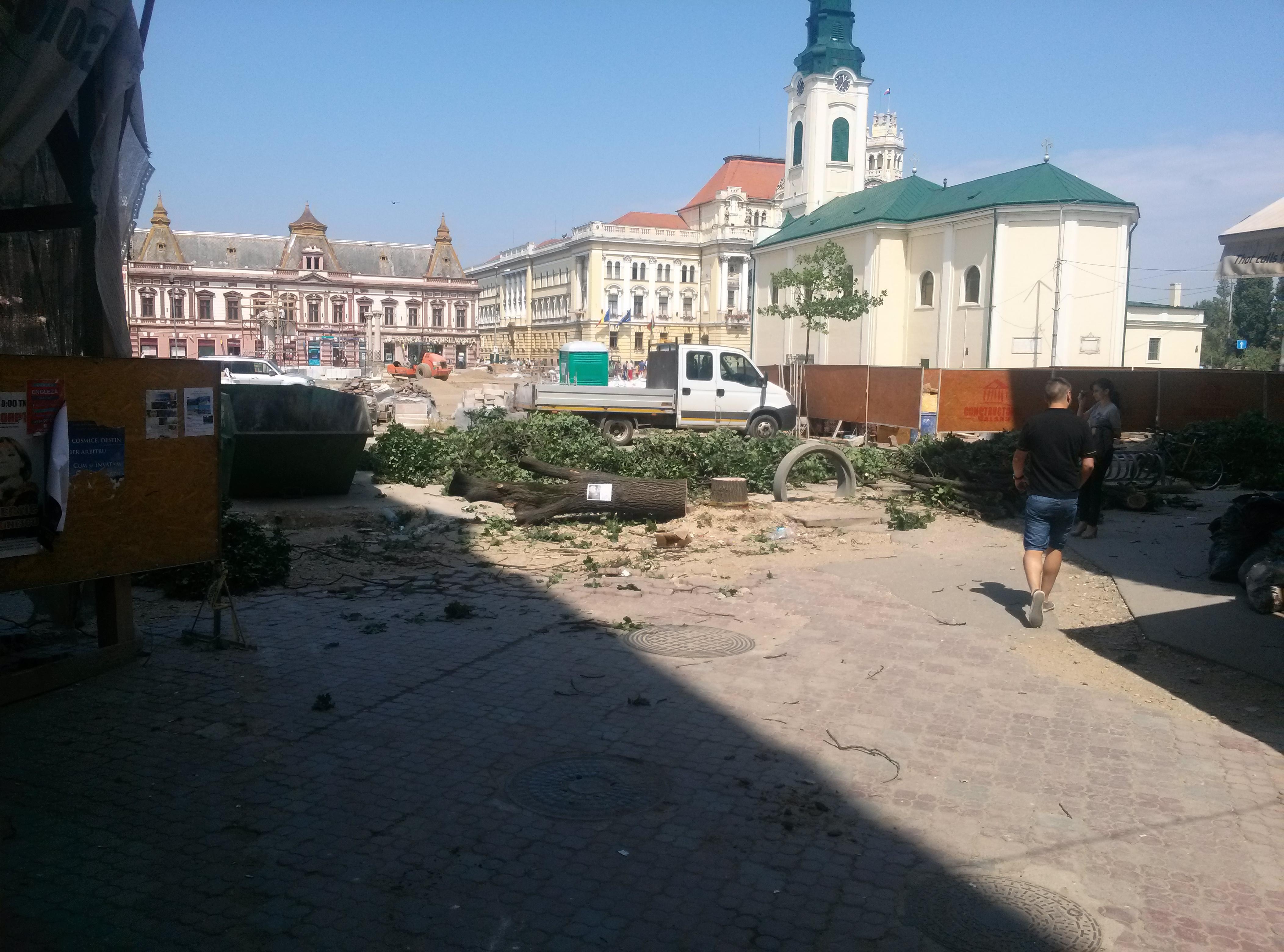 copaci taiati 30 iunie 2015 (14)