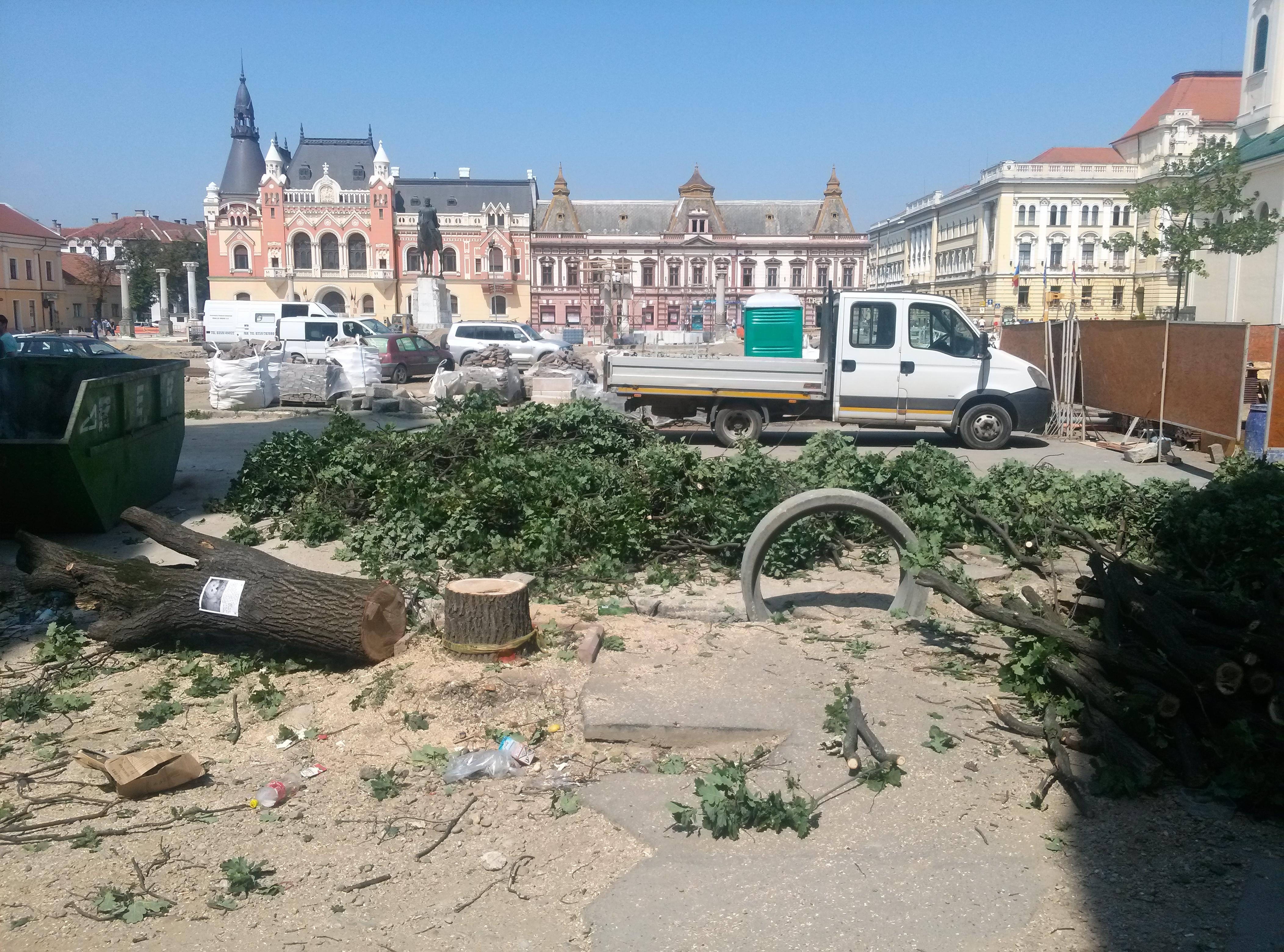 copaci taiati 30 iunie 2015 (2)
