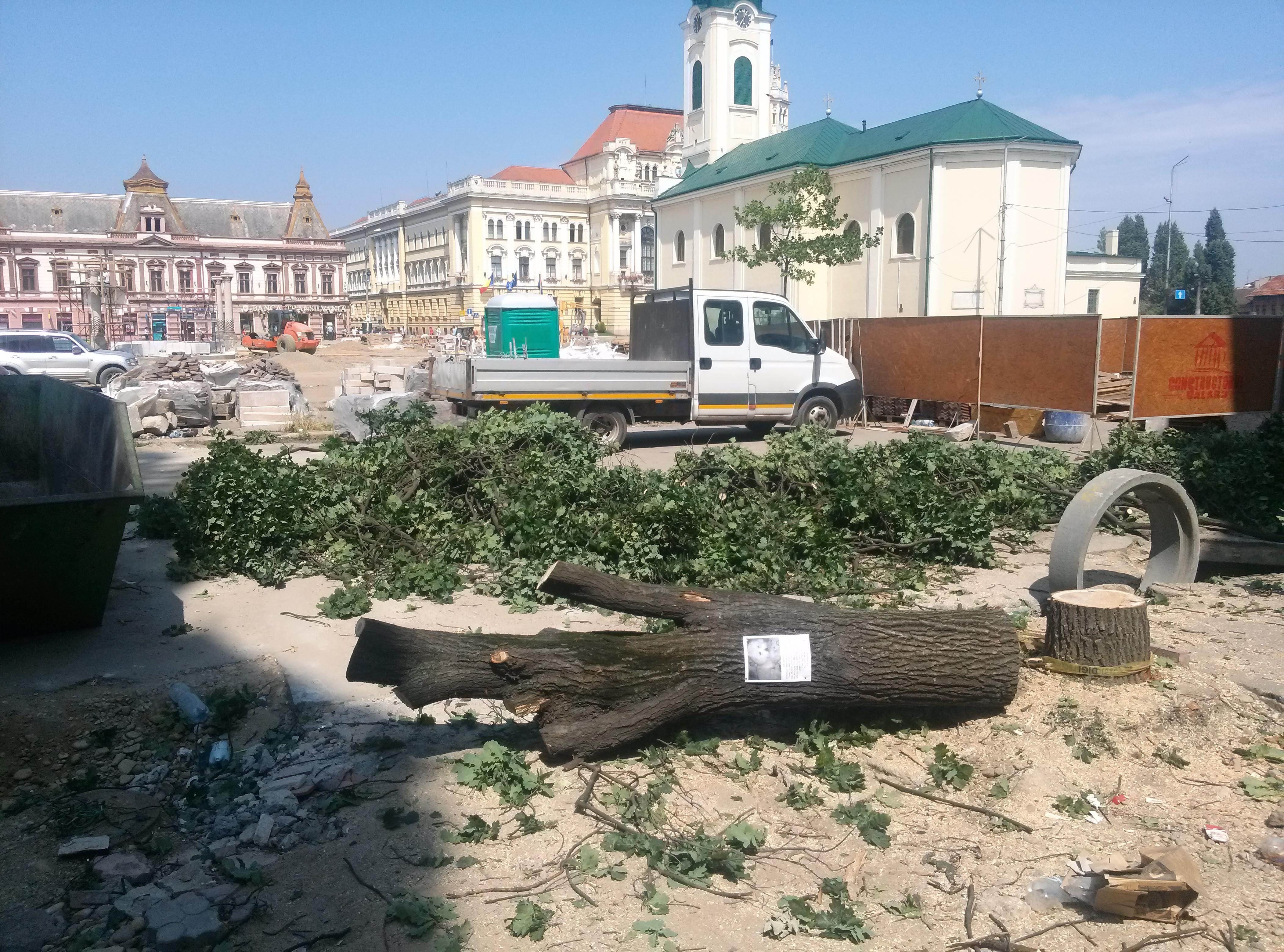 copaci taiati 30 iunie 2015 (4)