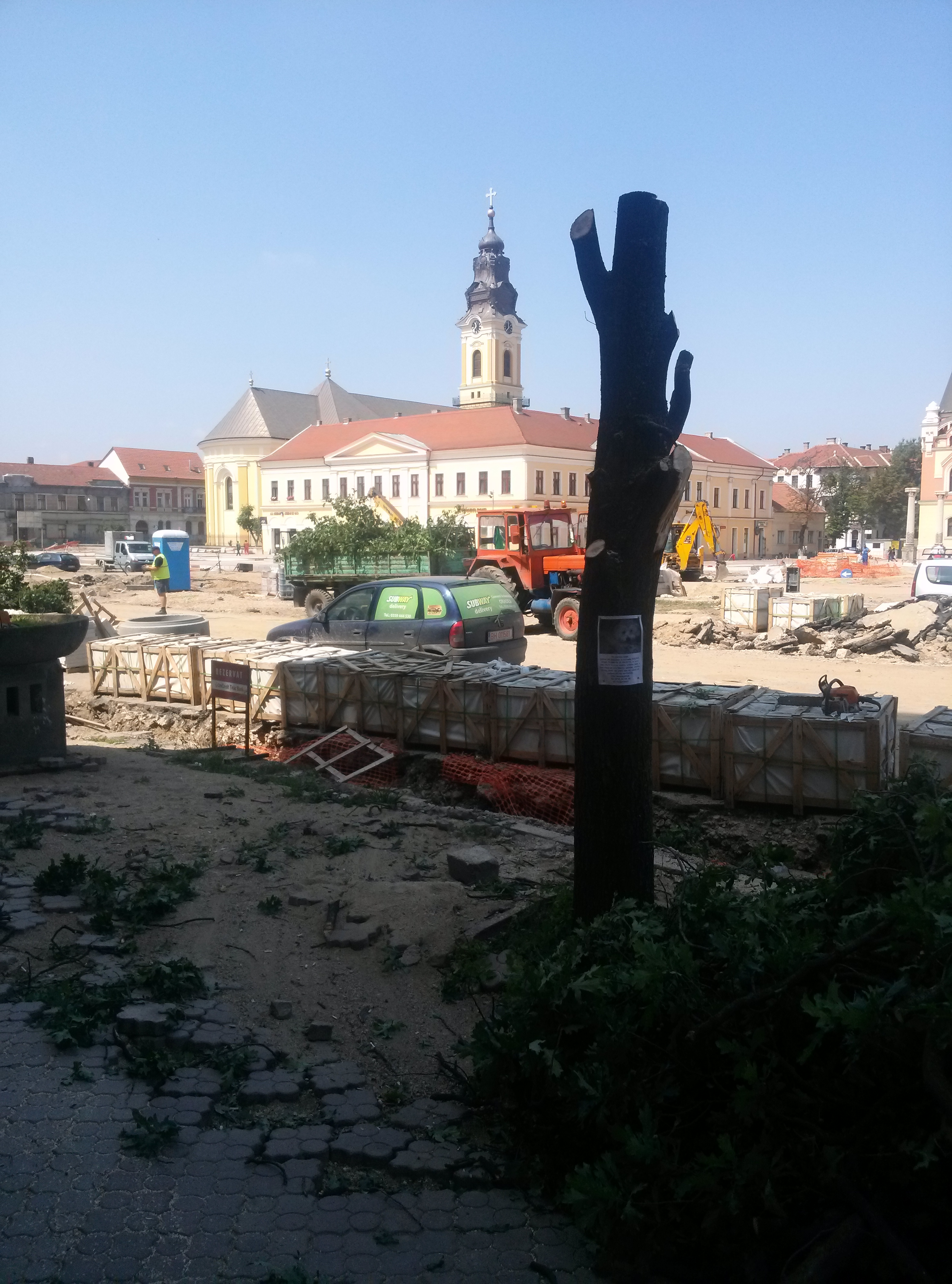 copaci taiati 30 iunie 2015 (6)