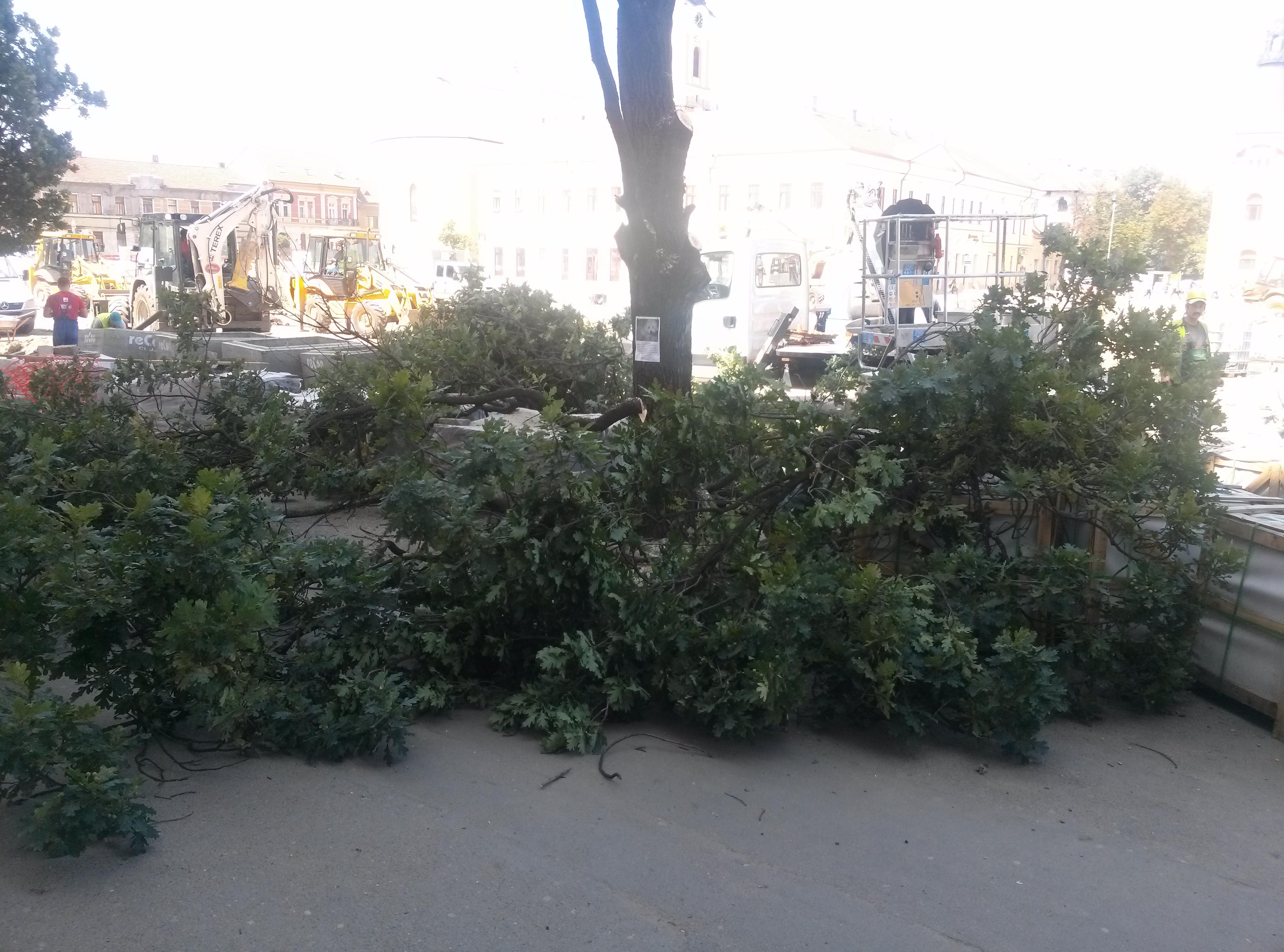 copaci taiati 30 iunie 2015 (8)