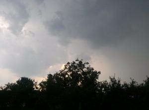 nori peste copaci