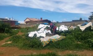 rufe la uscat Antananarivo Madagascar 3